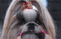 World Dog Show kicks off