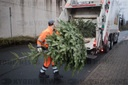 Christmas trees are picked up