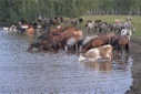Russia Agriculture Grazing