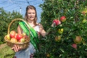 Start of apple harvest in Saxony