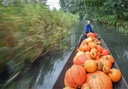 Pumpkin harvest in the Spreewald