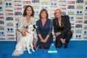 The Mirror Animal Hero Awards 2019