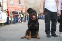 Big Rottweiler-Meeting