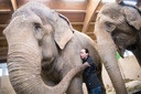 Circus Krone brings elephants to Munich