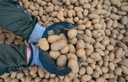Coronavirus - demand for potatoes is increasing