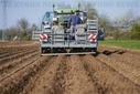 Planting of new potatoes