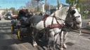 Coronavirus: Seniors get horse-drawn carriage food deliveries in Vienna neighbourhood