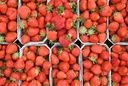 Start of the strawberry season in Hesse