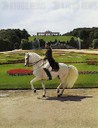 Lipizzan horses of the Spanish Riding School in Schoenbrunn Park, Vienna: Favory Basilika in a piaffe.