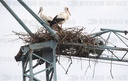 Storks nesting on construction crane