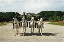 Horses of the Spanish Riding School in Schoenbrunn Park: four Lipizzan horses and their riders;