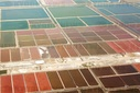 Aerial photo of shandong Lubei Spring salt harvest season, colorful yantian mouth red like nature's palette!