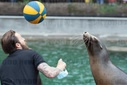 Cologne Zoo presents newborn Californian sea lion