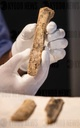 "New ivory findings in the World Heritage Cave ""Hohle Fels"