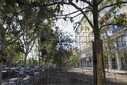 Neighbors of the Retiro district (Madrid) ask that the trees in the Plaza del Niño Jesús not be cut down