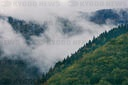 Mist in Carpathian Mountains