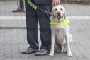 ROYALS TONGEREN GUIDE DOG CENTRE