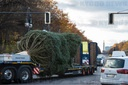 Christmas tree for Pariser Platz at Brandenburg Gate