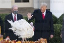 White House Thanksgiving Turkey Pardoning Event