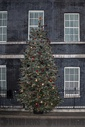 This year's Christmas tree outside Number 10 Downing Street, London